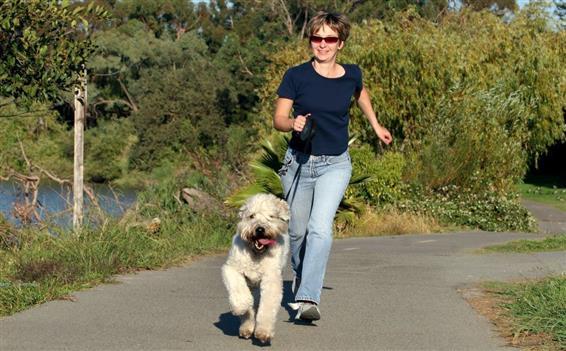 Hvordan Træner Man Sin Hund