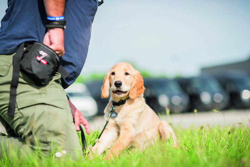 Flere af soldaterne fortæller, at de er mest plaget af PTSD'en, når deres hjerner ikke er beskæftiget. Derfor kan hundene være med til at holde dem i gang og holde symptomerne nede.