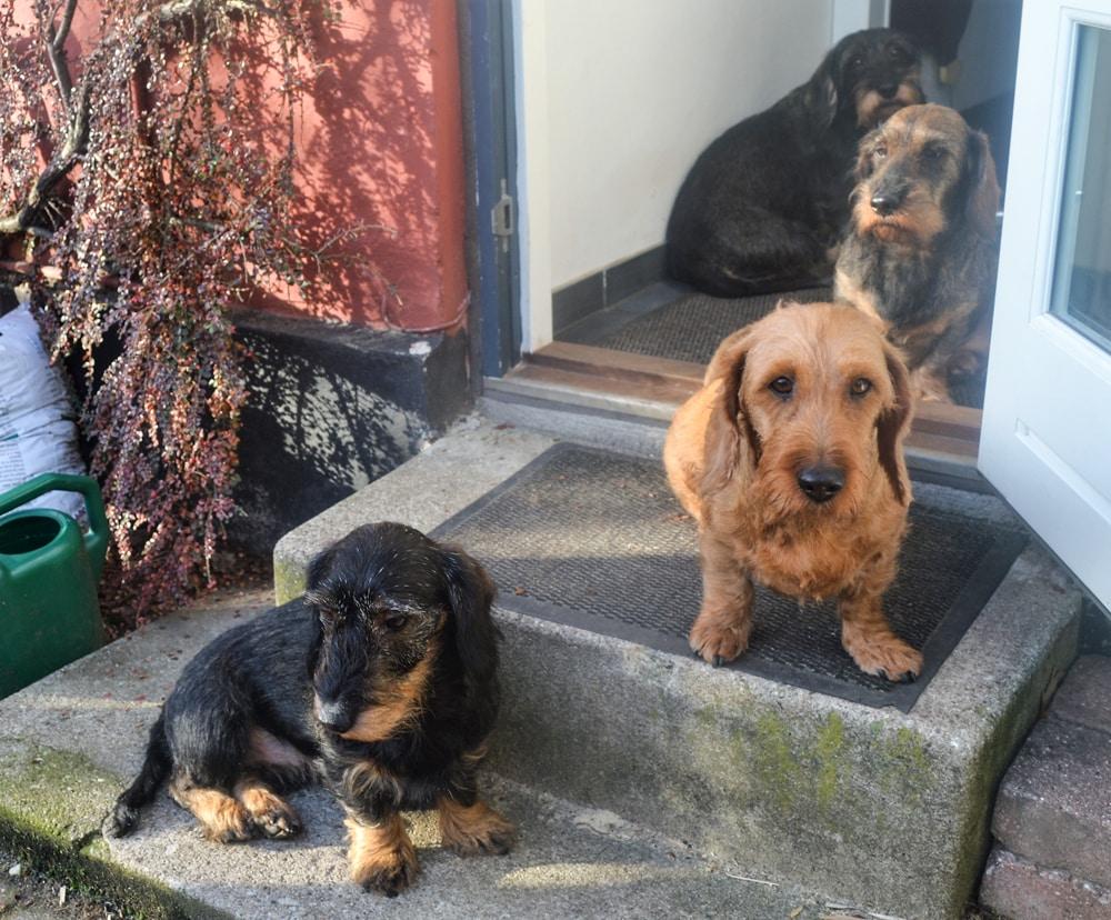 hvornår må en hund gå på trapper