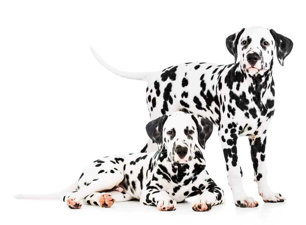 hundeseng i tre